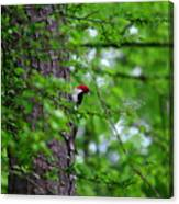 Red Headed Beauty Canvas Print