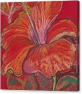 Red Hibiscus #1 Canvas Print