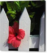 Red Hibiscus And White Fence Canvas Print