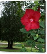 Red Hibiscus Highlights A Scene On The River Canvas Print