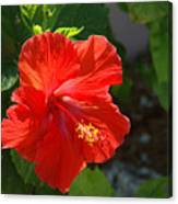 Red Hibiscus II Canvas Print