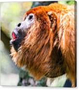 Red Howler Monkey Alpha Male Canvas Print