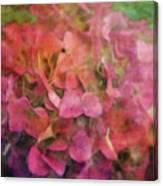 Red Hydrangea 2421 Idp_2 Canvas Print