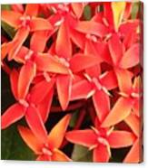 Red Indian Flowers Like Sunshine - Macro Photography Canvas Print