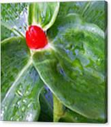 Red Jewel Canvas Print