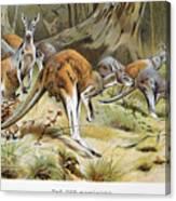 Red Kangaroo Canvas Print