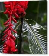 Red Lava Flower Canvas Print