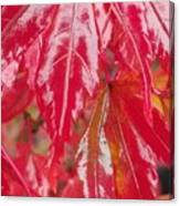 Red Leaf Abstract Canvas Print