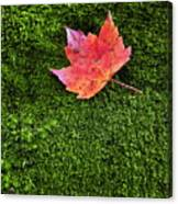 Red Leaf Green Moss Canvas Print