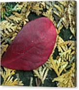 Red Leaf On  Arborvitae Leaves Canvas Print