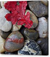 Red Leaf Wet Stones Canvas Print
