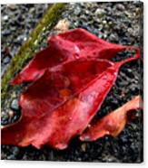 Red Leaves And Concrete Canvas Print