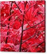 Red Leaves And Stems 2 Pd Canvas Print