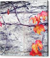 Red Leaves Growing By The Wall. Autumn Canvas Print