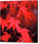 Red Leaves In Fall  Canvas Print