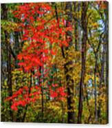 Red Leaves Of Autumn Canvas Print