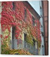 Red Leaves Of Fall Canvas Print