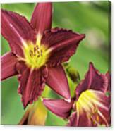 Red Lily 2 Canvas Print