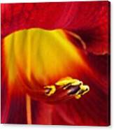 Red Lily Center 4 Canvas Print