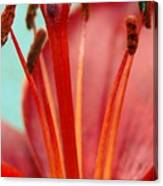 Red Lily Reach Canvas Print