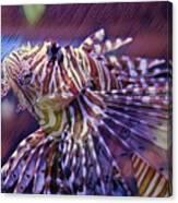 Red Lionfish Art Canvas Print