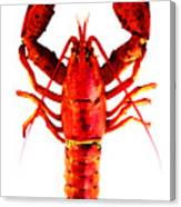 Red Lobster - Full Body Seafood Art Canvas Print