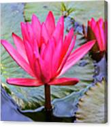 Red Lotus Canvas Print