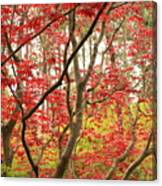 Red Maple Leaves And Branches Canvas Print