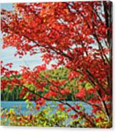 Red Maple On Lake Shore Canvas Print
