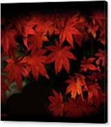 Red  Momiji Canvas Print