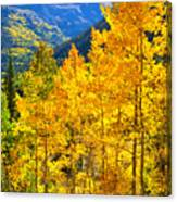 Red Mountain Aspens Canvas Print