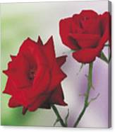 Red Mr. Lincoln Roses Canvas Print