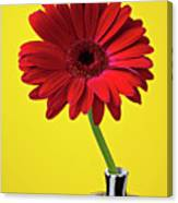 Red Mum Against Yellow Background Canvas Print