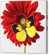 Red Mum With Dogface Butterfly Canvas Print