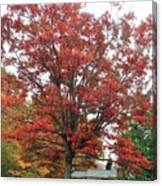 Red Oak 2 Canvas Print