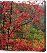 Red Oak And Millers River Valley Canvas Print