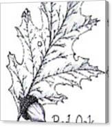 Red Oak Leaf And Acorn Canvas Print