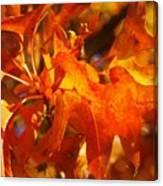 Red Oak Leaf Canvas Print