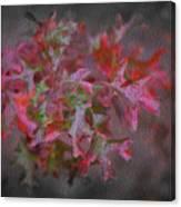 Red Oak Leaves, Grapevine Texas Canvas Print