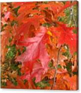 Red Oak Leaves Canvas Print