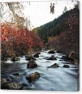 Red Oak Slow River Canvas Print
