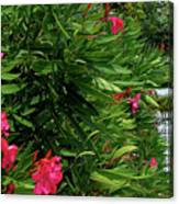 Red Oleander Arbor Canvas Print