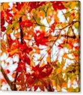 Red On A Tree Canvas Print
