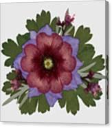 Red Open Faced Potentilla Pressed Flower Arrangement Canvas Print