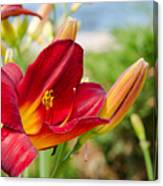 Red Orange Lily By The Lake Canvas Print