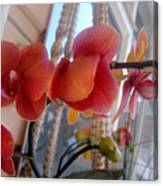 Red Orchid Flowers 01 Canvas Print