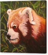 Red Panda 2 Canvas Print