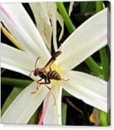 Red Paper Wasp And Spider Lily 000 Canvas Print