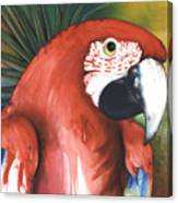 Red Parrot Canvas Print