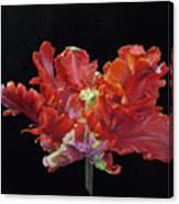 Red Parrot Tulip - Oils Canvas Print